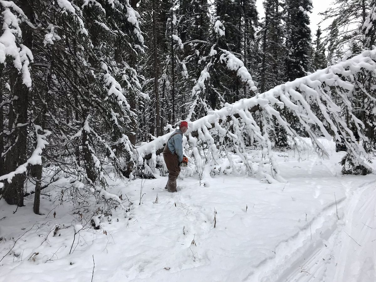 Clearing trails getting ready so groomer can get thro.