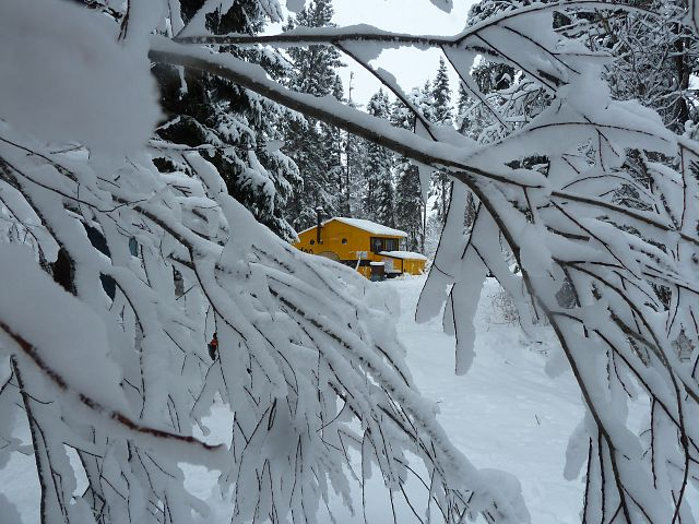 The trees hung low with the weight of the fresh, heavy snow at the I-doo hut on the Stefanuik Trail.