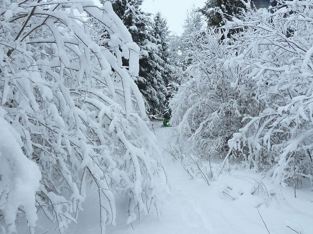 All along the Stefanuik Trail, the wet snow  caused small trees and branches to arch over the freshly covered path. As we shook each branch, it would swing back up to it's original stance.