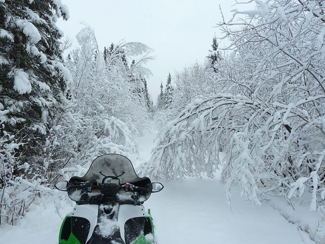 At Stefanuik Trail's I-doo hut. After several miles of shaking branches to be able to pass, we tired and decided to find somewhere more open to ride.