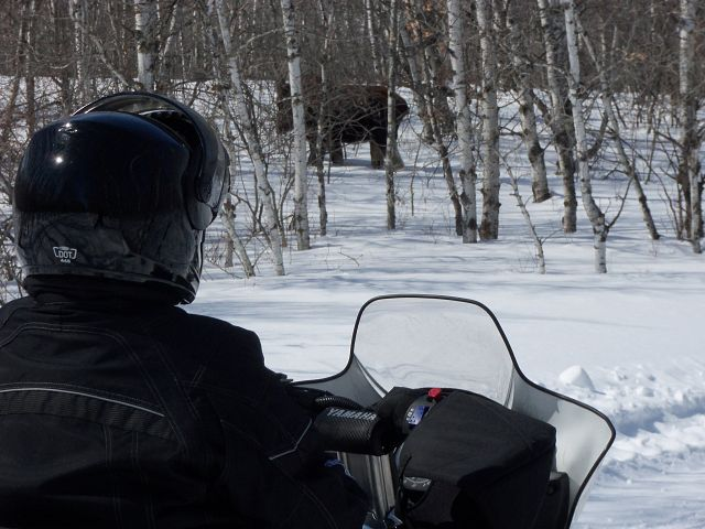 out for a leisurely ride and came upon this moose just minding his own business, he was not at all scared.