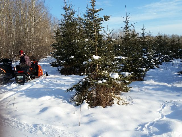 Xmas tree hunt