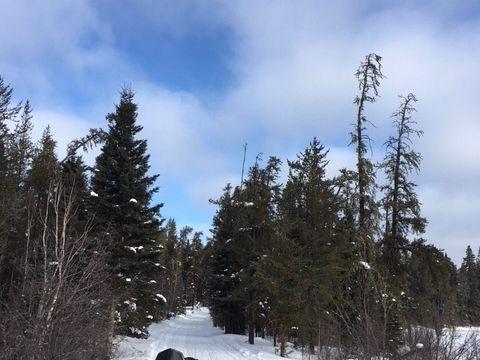 Bluebird trail day