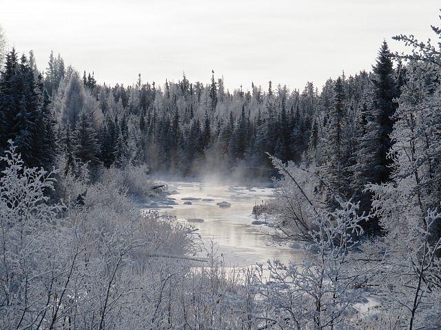 Trail 208j Caribou Creek